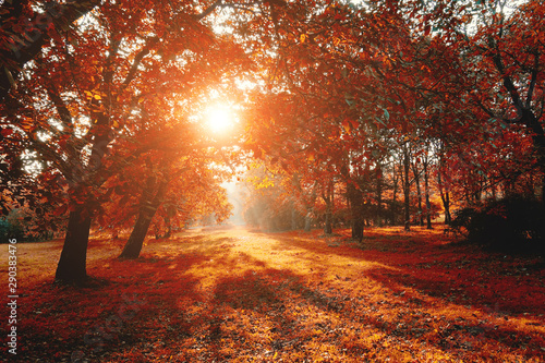 Photo sur Toile Marron chocolat Scenic image of bright trees in sunny beams.