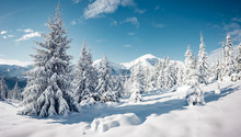 Scenic Image Of Spruces Tree I...