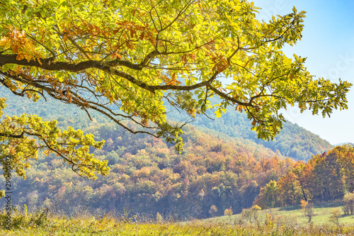 Foto auf AluDibond Gelb Oak branch with autumn leaves in the mountains