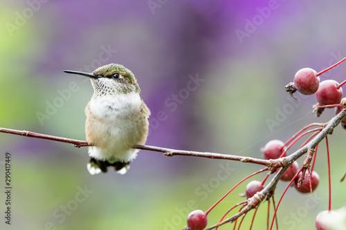 Photo  Closeup of a hummingbird in the garden