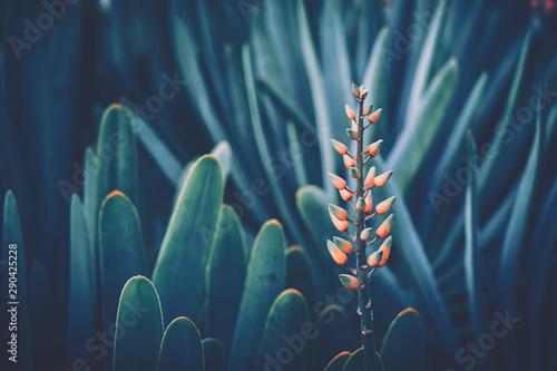 Canvastavla  Aloe Flower with vintage style
