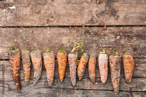 Rotten carrots laid out in a row. Fototapet
