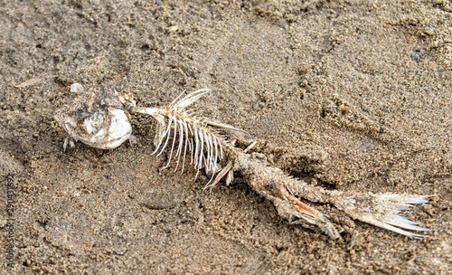 Skeleton of fish on the sandy shore.