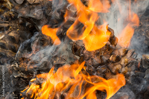Pine cones smoking and burning in fire