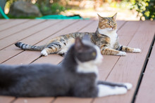 Two Cats Relaxing Together On ...