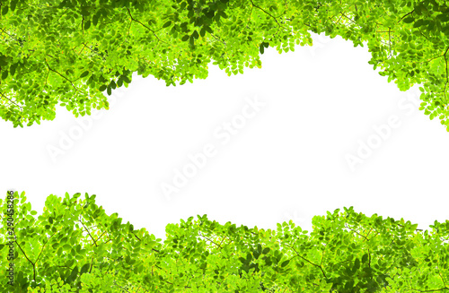 Green nature fresh spring background leaf green in the garden Fotobehang