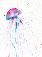 Watercolor Painting Of Jellyfish. Handmade