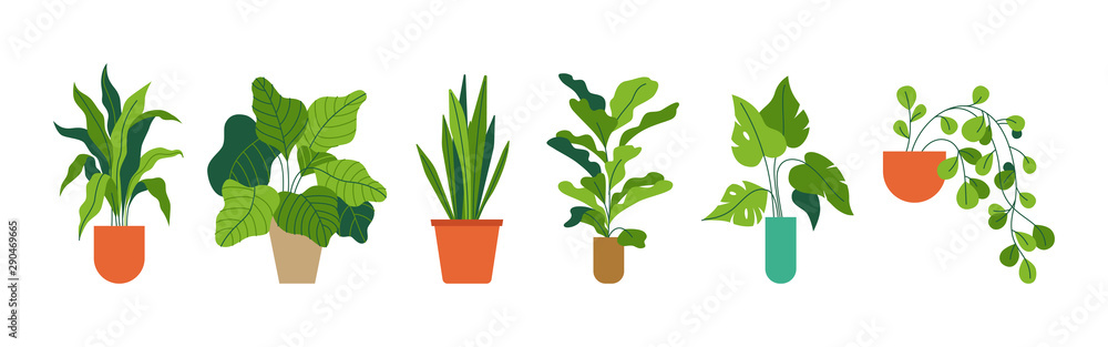 Fototapeta Decorative green houseplants in pots and planters, natural home decor and urban jungle