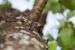 Żywica na pniu drzewa macro