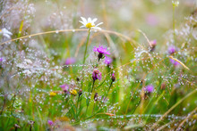Mountain Grass And Flowers With Dew Drops As Background