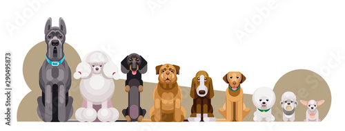 Fototapeta Flat illustration of dogs of different breeds sitting in growth from large to sm