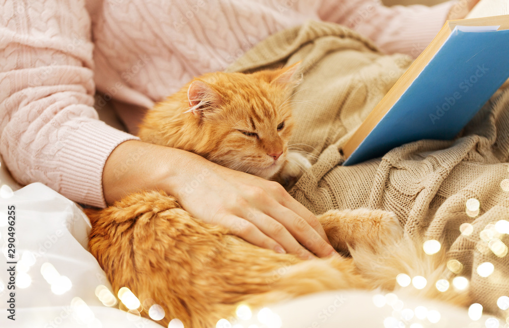 Fototapety, obrazy: pets, hygge and people concept - close up of red tabby cat and female owner reading book in bed at home