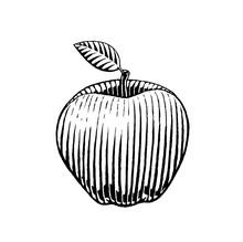 Ink Sketch Of An Apple