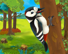 Cartoon Animal Scene With Woodpecker - Illustration For The Children