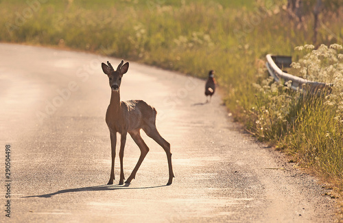 Tuinposter Ree Animals out on the road early in the morning