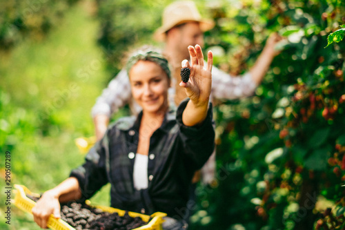 Happy couple harvesting fruit Fototapeta