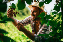 Young Farmer Harvesting Brambles