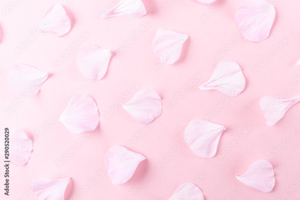 Fototapeta Pink geranium petals on a pink background. Stylish minimalistic image, flat lay, top view. The concept of Valentine's Day, Women's Day, romance, wedding. Place for text.