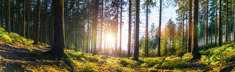 Cichy Las na wiosnę z pięknymi jasnymi promieniami słońca