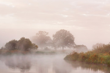 Fototapeta Minimalistyczny Misty autumn morning on river. Lone oak trees on meadow
