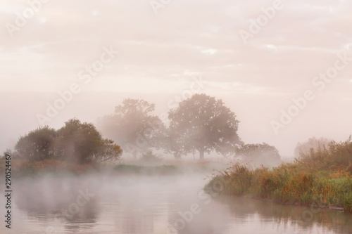 Fotografia  Misty autumn morning on river. Lone oak trees on meadow