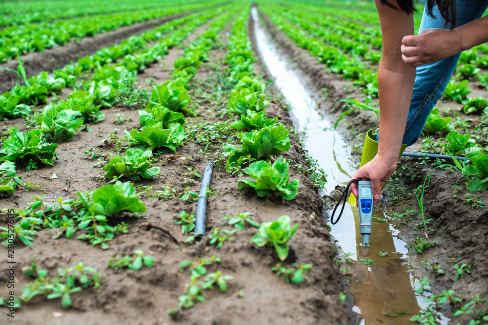 Fototapety, obrazy: Woman mesures irrigation water with digital PH meter in watering canal.
