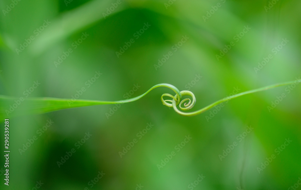 Fototapety, obrazy: Abstract leaf  spiral close-up  in a blurred background