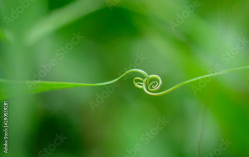 Printed kitchen splashbacks Garden Abstract leaf spiral close-up in a blurred background
