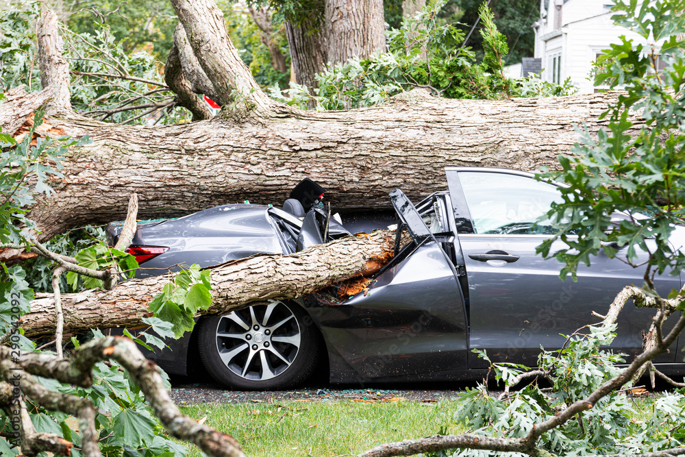 Fototapeta Car crushed by tree during hurricane