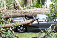 Car Crushed By Tree During Hur...