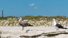 Two Seagulls Standing On The Beach With Sand Dunes In The Background