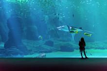 Beautiful Girl Admiring The Show Of Underwater Life