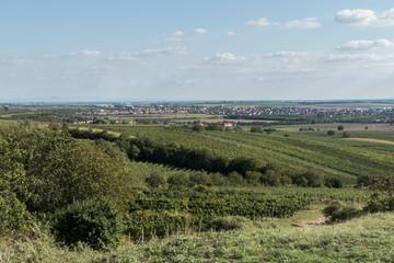 Fototapeta na wymiar Velke Bilovice vineyard Czech Republic