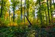 Sonnenlicht im Herbstlichen Wald