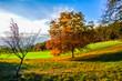 Herbstliche Blätter an Obstbäumen