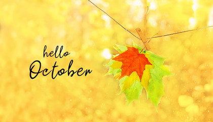 Hello October. autumn forest blurred background with text. bright yellow maple leaves close up. beautiful abstract autumn park landscape. Fall season concept. soft selective focus