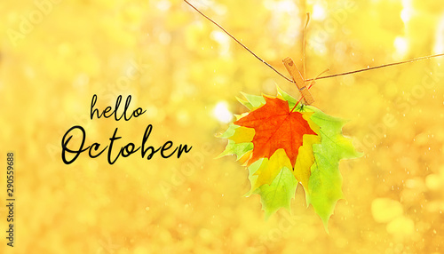 Foto auf AluDibond Orange Hello October. autumn forest blurred background with text. bright yellow maple leaves close up. beautiful abstract autumn park landscape. Fall season concept. soft selective focus