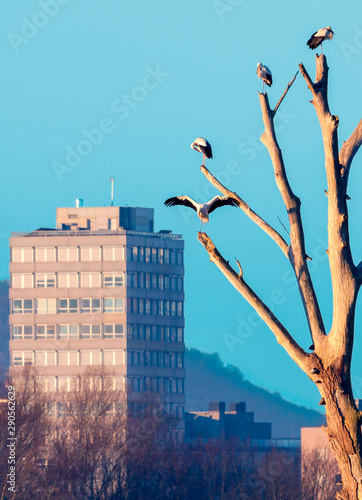 Valokuvatapetti Apartamentos