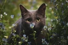 BLACK CAT LIES IN BLUE FLOWERS