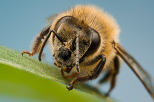 Bumble Bee Sitting On Top Of A...