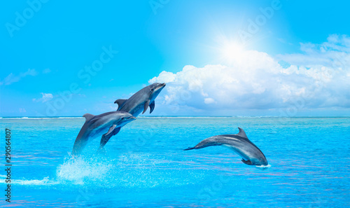 Stampa su Tela Group of dolphins jumping on the water