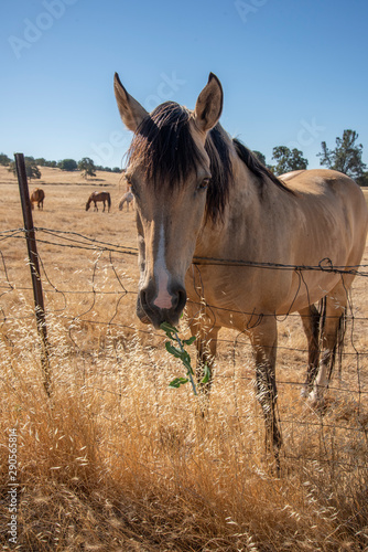 Horses reaching over wire fence to graze