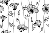 Fototapeta Kwiaty - california poppy flower and leaf drawing illustration with line art on white backgrounds.