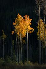 Beige Leafed Trees