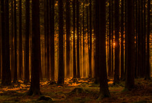 Forest During Golden Hour