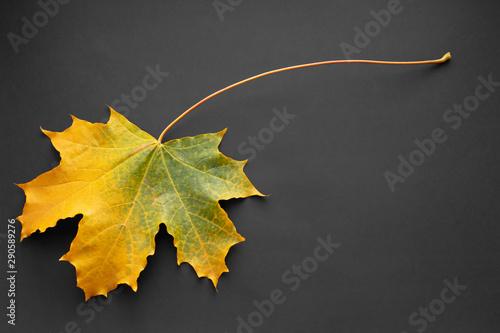 Fotografie, Obraz  Autumn yellow maple leaf on dark background