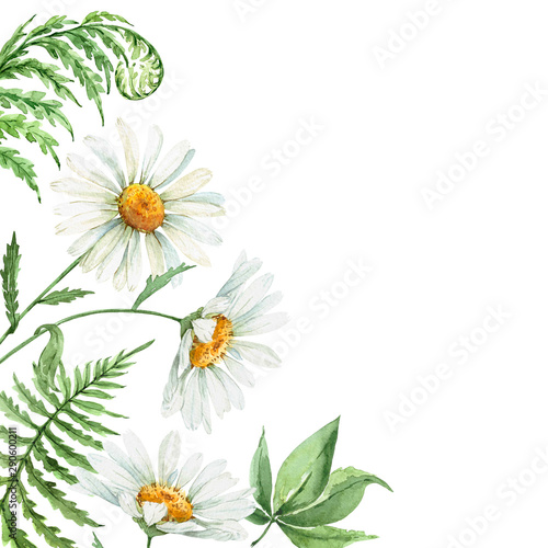 daisy flowers and green fern leaves. border watercolor illustration Wall mural