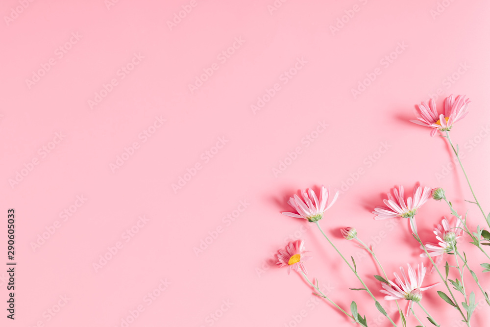 Fototapeta Beautiful flowers composition. Pink flowers chamomile on pastel pink background. Valentines Day, Happy Women's Day, Mother's day. Flat lay, top view, copy space