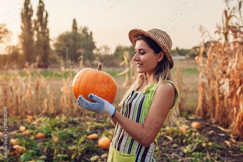 Fotografija Pumpkins