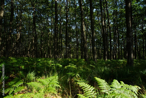 Türaufkleber Darknightsky Forest and fern High fens